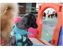 quanto custa hotel creche de cães no Parque do Carmo