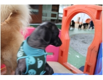 quanto custa hotel creche de cães na Vila Mariana