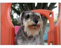 quanto custa hotel creche para cães Água Chata