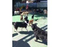 quanto custa hotel de cachorro em Aricanduva