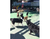 quanto custa hotel de cachorro Maia