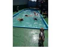quanto custa hotel para cachorro em sp Água Azul