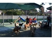 quanto custa hotel pra cachorro no Ibirapuera