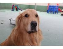 quanto custa resort para cães Vila Barros