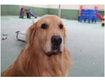 quanto custa resort para cães Jardim Aracília