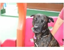 quanto custa serviços de hotel para cães no Tatuapé