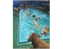 quanto custa spa de cachorro Macedo