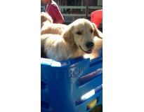 quanto custa spa para cachorros em Pinheiros