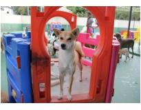 resort de cães preço em Perus
