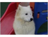 resort para cães preço em Santa Cecília
