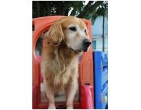 serviço de creche para cachorro em Santo Amaro