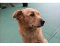 serviços de creche para cachorro preço no Rio Pequeno