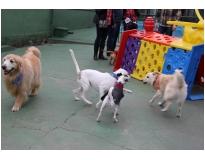 serviços de hotel para cachorro preço Monte Carmelo