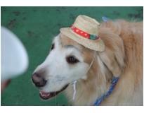 serviços de hotel para cachorro em Cachoeirinha