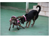 serviços de hotel para cachorros no Centro
