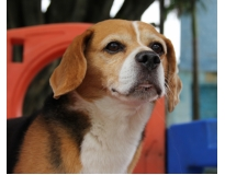 serviços de hotel para cães preço no Tatuapé