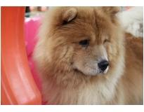 serviços de hotel para cães no Pari