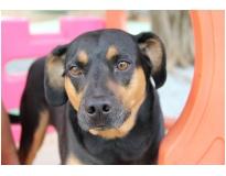 serviços de hotel para cão em Aricanduva