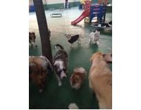 serviços de spa canino preço na Consolação