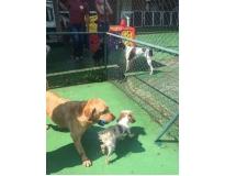 serviços de spa canino CECAP