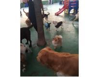 serviços de spa caninos em Perus