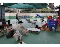 Hotéis de Cães