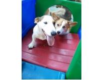 spa canino preço no Jardim Paulistano