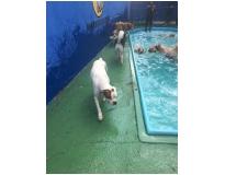 spa de cachorros na Cidade Patriarca