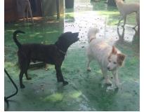 spa e day care para cães preço em São Mateus