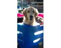 spa especializado em cães preço Jardim Aracília