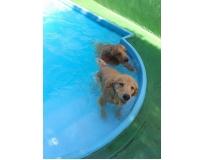 spa especializado em cães na Vila Buarque