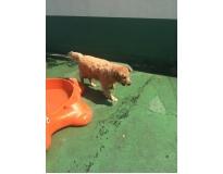 spa para animais preço Itapegica