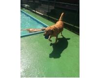 spa para animais em Glicério