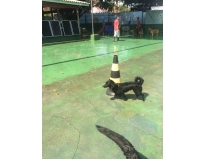 spa para animal no Bom Retiro