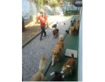 spa para cachorros preço Jardim Aracília