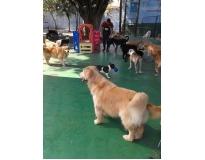 spa para cachorros Monte Carmelo