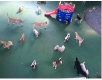 spa para cães em são paulo no Pari