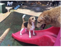 spa para cães em sp preço no Itaim Bibi