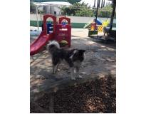 spa para cães em sp no Alto da Lapa