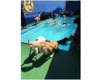 hotel spa para cães