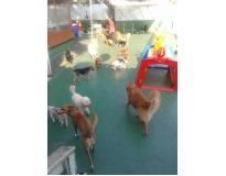 serviços de spa canino