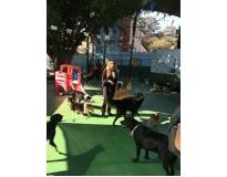 spa com day care canino