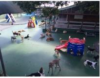 Spa de Cachorro