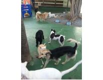 spa especializado em cães