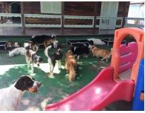 spa para cães em são paulo