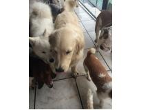 spa para cão em sp na Sé